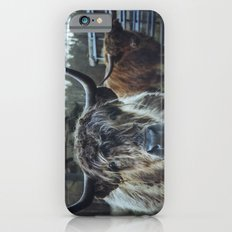 Closeup of Highland cattle cows. Norfolk, UK. iPhone 6s Slim Case