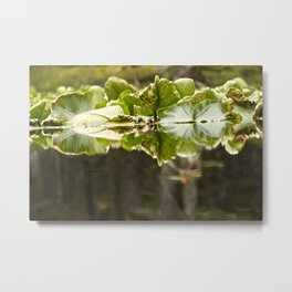 Lily Pad Photography Print Metal Print