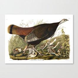 Wild Turkey (Audubon) Canvas Print