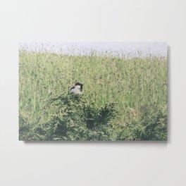 Brazen birdie Metal Print