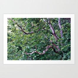 An Old Branch Art Print