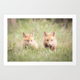 Learning to Hunt - Red Fox Pups Animal / Wildlife Photograph Art Print