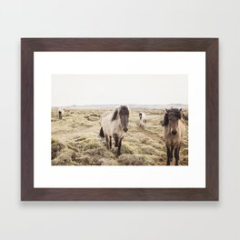 Horse Photograph in Color Framed Art Print