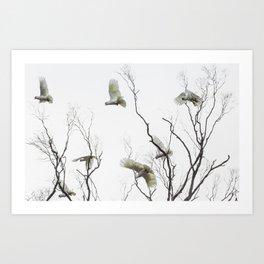 Birds of Australia Art Print