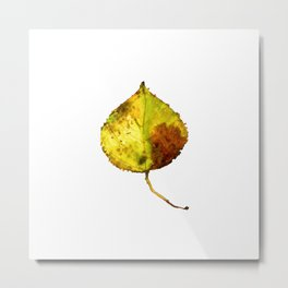 Aspen Leaf 2 Metal Print