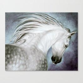 Andalusian Dapple Gray Canvas Print