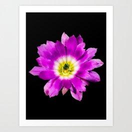 Lilac flower - 156 Art Print