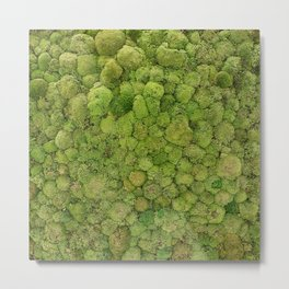 Green moss carpet Metal Print