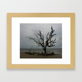 Ghost Tree Beach Framed Art Print
