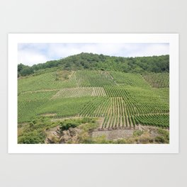 Vineyards 3 Art Print
