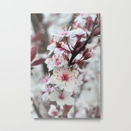 Plum Tree Metal Print