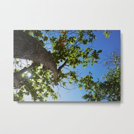 Look Up! Metal Print