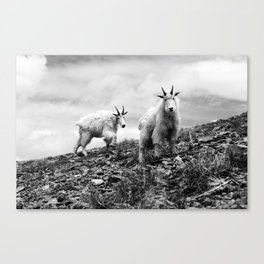 MOUNTAIN GOATS // 1 Canvas Print