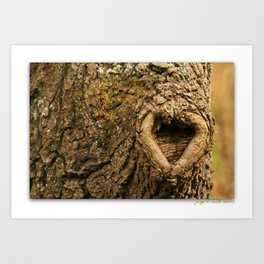 Walnut Love * Heartwood * Art Print