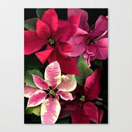 Colorful Christmas Poinsettias, Scanography Canvas Print
