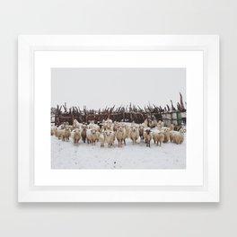 Snowy Sheep Stare Framed Art Print