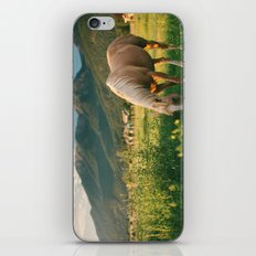 Pretty Horse Eating Grass in the Montana Sunset iPhone & iPod Skin