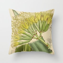 Agave fourcroydes, Asparagaceae, Agavoideae Throw Pillow