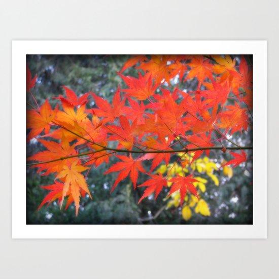 November maple Art Print