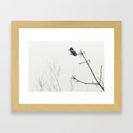Belted Kingfisher Looking for Prey on a Foggy Day Framed Art Print