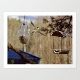 blue tit flying Art Print
