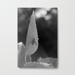 Just a fly Metal Print