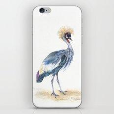 Grey Crowned Crane Bird iPhone & iPod Skin