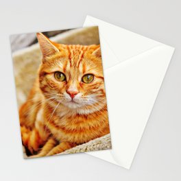 Cute red cat Stationery Cards