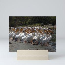 Group of White Pelicans Mini Art Print