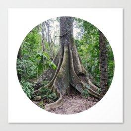 Massive Tree in Amazon Jungle Circle Fine Art Print Canvas Print