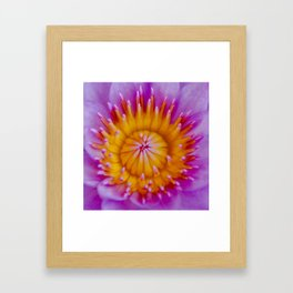 nature's lipstick display -  Framed Art Print