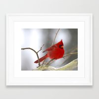 cardinal Framed Art Prints featuring Cardinal by Veronica Ventress