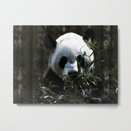 Chinese Giant Panda Bear Metal Print