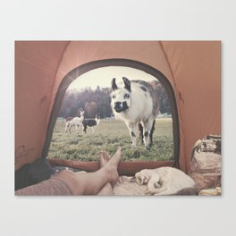 ALPACA  - CAMPING WITH FRIENDS Canvas Print