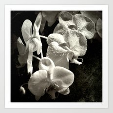 The poetry of reproduction Art Print
