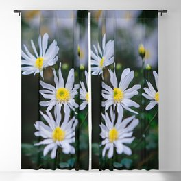 Daisy flower, Daisy hill, Asteraceae flower,  daisy hill, Photography, beautiful view, View Poster, Canavas Print Blackout Curtain