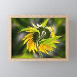 The sunflower from behind Framed Mini Art Print