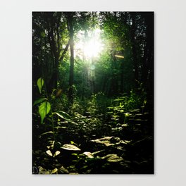 The Path through the Forest Canvas Print