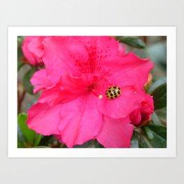 Ladybug on Azalea Art Print