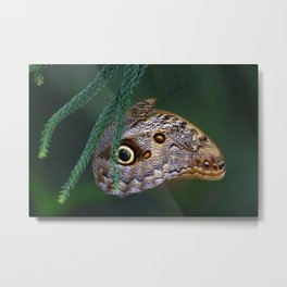Perfection of a Sleeping Butterfly Metal Print