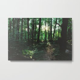 Forest Trail XXVII Metal Print