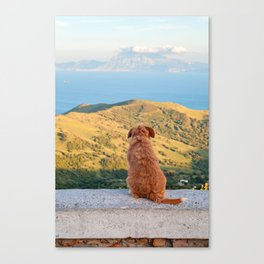 Lonely dog watching on Gibraltar Canvas Print
