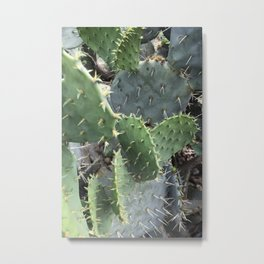 Cacti  Metal Print