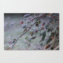 Frosty Hawthorn Canvas Print