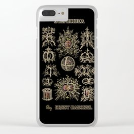 """""""Stephoidea"""" from """"Art Forms of Nature"""" by Ernst Haeckel Clear iPhone Case"""