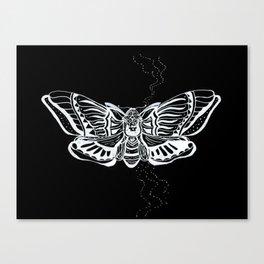 Death's Head Moth Canvas Print