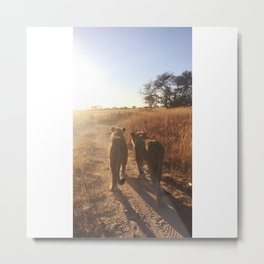 Lion Pride Walk Metal Print