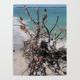 Sea Shell Samba I Poster
