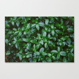 Green Plants and Leaves Canvas Print