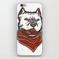 pitbull iPhone & iPod Skins featuring Pitbull by VentureDesign